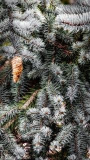 2014 - Mt Lofty Botanic Gardens
